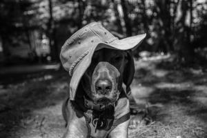 Buddy hat 1 camp