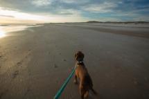 buddy beach nc