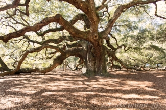 Angel Oak